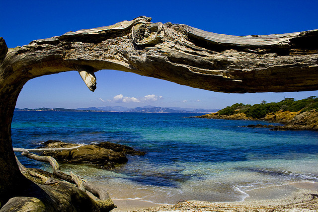 wild nature in Porquerolles